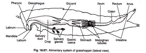 Inner Diagram Of Grasshopper Trusted Wiring Diagram